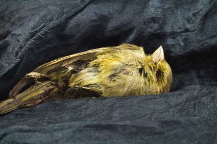 Dead canary on coal