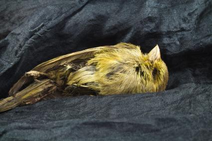 Dead canary on coal