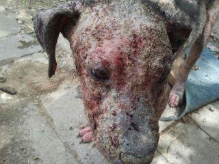 Sad dog with mange