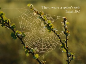 mattias-klum-a-dewy-spider-web-on-a-dwarf-birch-tree-1