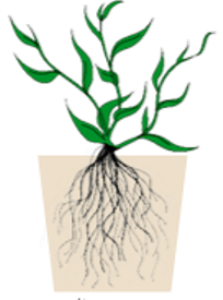 plant-roots